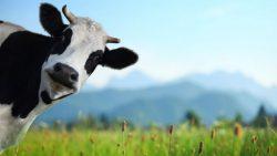 Peter Kažimír si daň z príjmu pomýlil s dojnou kravou