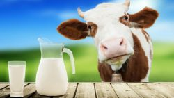 Spoločná poľnohospodárska politika EÚ – kvóty na mlieko končia